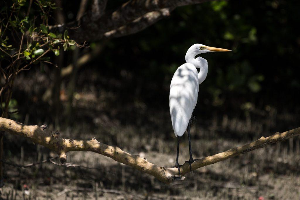 Sundarban Delta