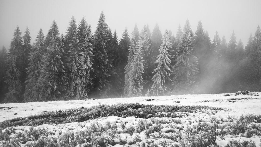 Winter in Böhmerwald