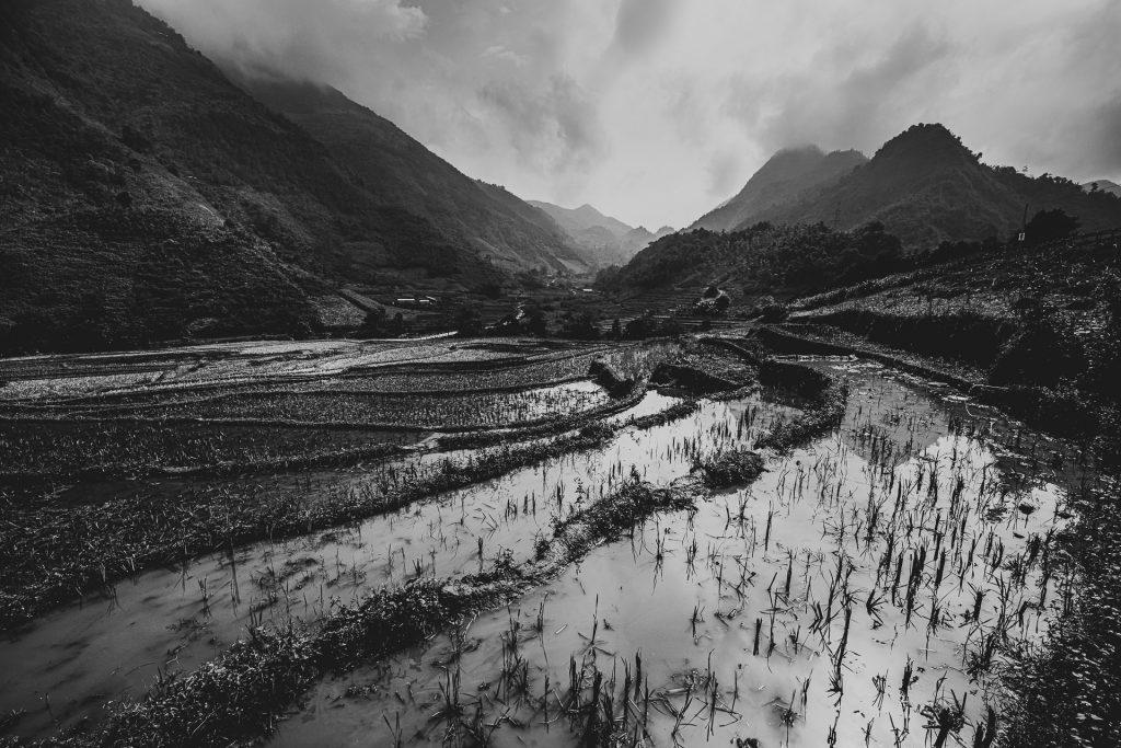 Rice fields in Quan Ba